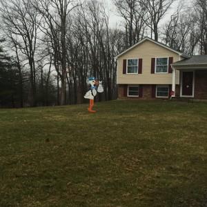 Poolesville, MD Stork Lawn Sign<br/> Flyingstorks<br/> (301)606-3091
