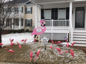 Flock of flamingos for Birthday<br/> Flyingstorks<br/> (301)606-3091
